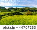 日本 田畑 米の写真 44707233