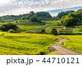 水田 稲 田畑の写真 44710121