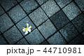 アブストラクト 孤独 バックグラウンドの写真 44710981