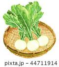 かぶ 水彩画 野菜のイラスト 44711914
