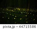 蛍 ホタル 森林の写真 44715586