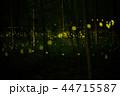 蛍 ホタル 森林の写真 44715587