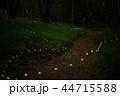 蛍 ホタル 森林の写真 44715588