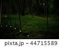 蛍 ホタル 森林の写真 44715589