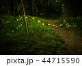 蛍 ホタル 森林の写真 44715590
