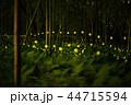 蛍 ホタル 森林の写真 44715594