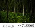 蛍 ホタル 森林の写真 44715595