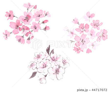 桜 水墨画 墨絵 彩墨画 3点セット 44717072