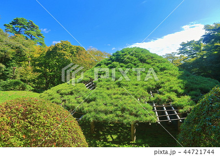 霞ヶ城公園の笠松(二本松城) 44721744