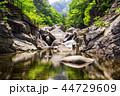 小川 森林 林の写真 44729609