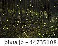 ヒメボタル ホタル 光の写真 44735108