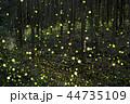 ヒメボタル ホタル 光の写真 44735109