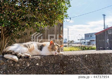 相島の猫 44737954