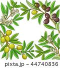 もくせい科 オリーブ 小枝のイラスト 44740836