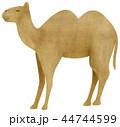 動物 哺乳類 ラクダのイラスト 44744599