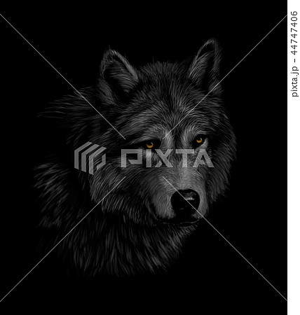 Portrait of a wolf head on a black background 44747406