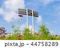 神戸総合運動公園 コスモス コスモス畑の写真 44758289