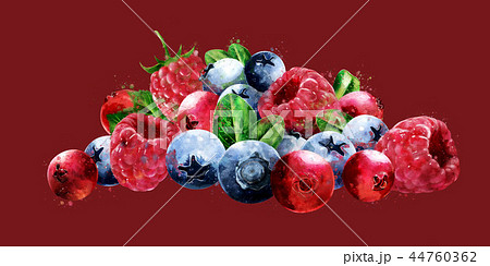 Raspberries, cranberries and blueberries on red background. Watercolor illustration 44760362