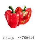 野菜 赤い ピーマンのイラスト 44760414