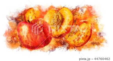 Peach on white background. Watercolor illustration 44760462