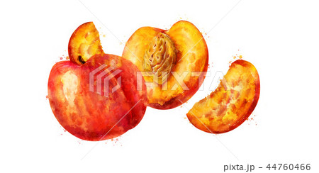 Peach on white background. Watercolor illustration 44760466