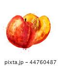 くだもの フルーツ 実のイラスト 44760487
