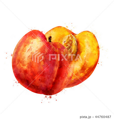 Peach on white background. Watercolor illustration 44760487