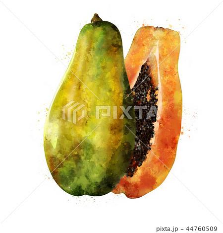 Papaya on white background. Watercolor illustration 44760509