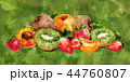アプリコット アンズ 杏のイラスト 44760807