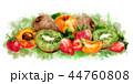 アプリコット アンズ 杏のイラスト 44760808