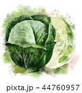 野菜 きゃべつ キャベツのイラスト 44760957