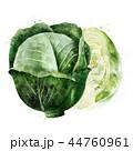 野菜 きゃべつ キャベツのイラスト 44760961