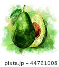 くだもの フルーツ 実のイラスト 44761008