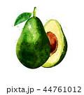 アボカド 水彩画 ペイントのイラスト 44761012