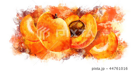 Apricot on white background. Watercolor illustration 44761016