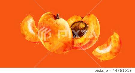 Apricot on orange background. Watercolor illustration 44761018