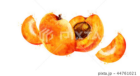 Apricot on white background. Watercolor illustration 44761021