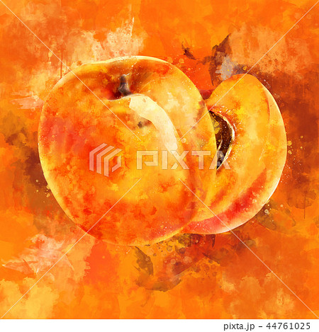 Apricot on orange background. Watercolor illustration 44761025