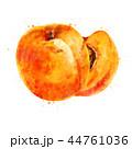 くだもの フルーツ 実のイラスト 44761036