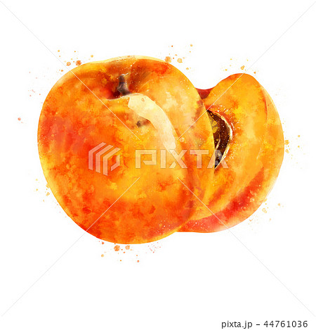 Apricot on white background. Watercolor illustration 44761036