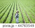 親子 おんぶ 畑の写真 44763549