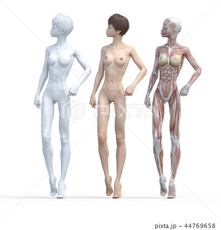 女性 解剖 筋肉 3DCG イラスト素材 44769658
