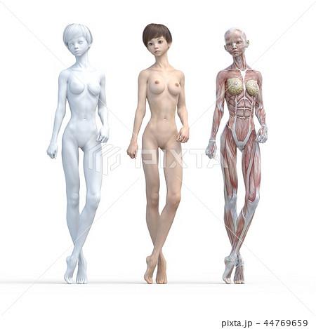 女性 解剖 筋肉 3DCG イラスト素材 44769659