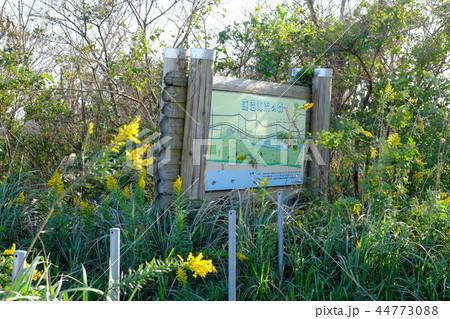 蓮沼海浜の森 千葉県立蓮沼海浜公園 44773088