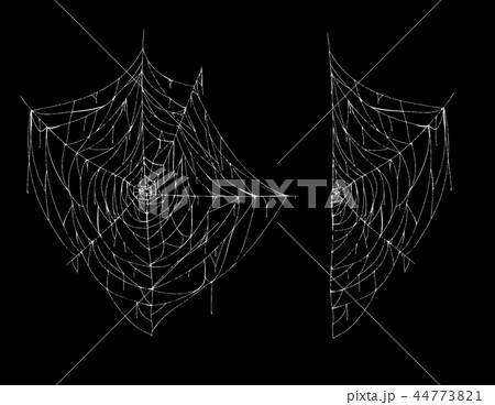 Vector hand drawn spiderweb, white spooky cobweb 44773821