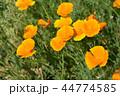 黄色い 黄 黄色の写真 44774585