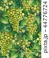 ぶどう ブドウ 葡萄のイラスト 44776724