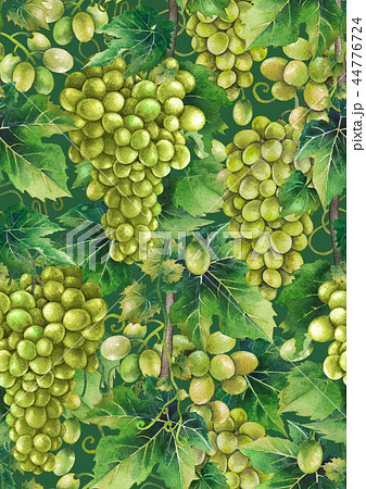 Watercolor pattern of white grapes bunches 44776724