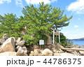 箱島神社 箱島 神社の写真 44786375