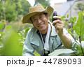 農家のシニア男性 44789093